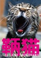 あくび猫.jpg